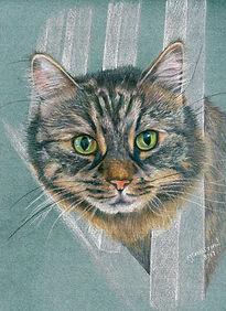 Life Like Realistic Colour Pencil Cat Drawing Portrait