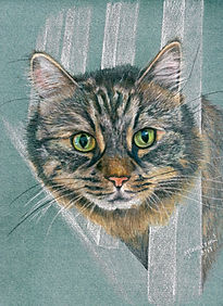 Life Like Realistic Colour Pencil Cat Drawing Portrait