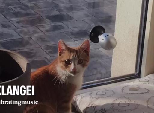 Hund und Katz lieben das Klangei - nun auch in Polen