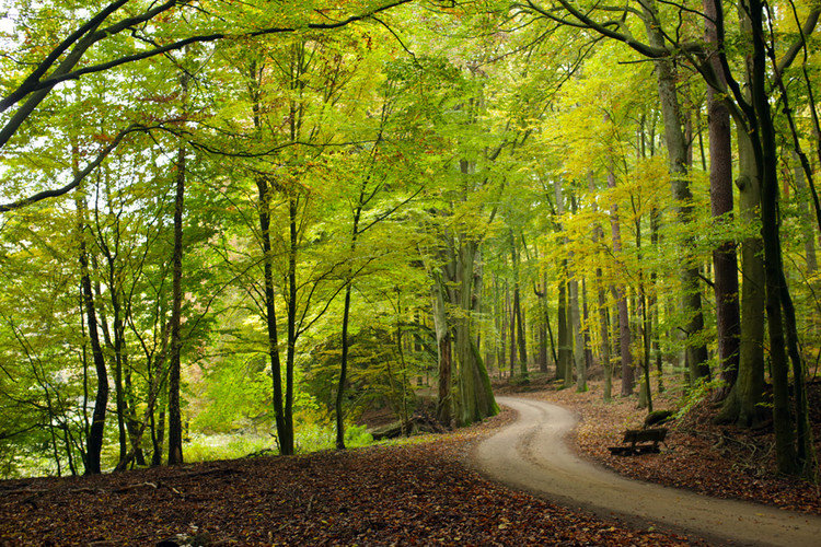 Waldweg 2.jpg