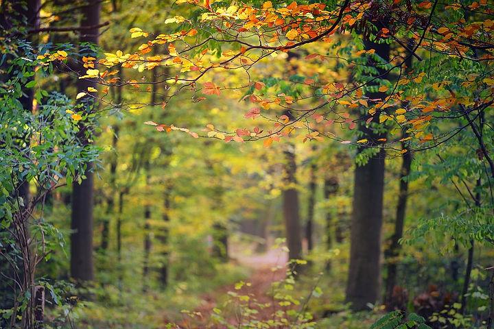 Herbstwald-4417372_960_720.jpg