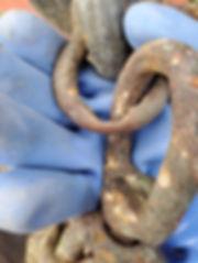 Porter 2 shackle.jpg