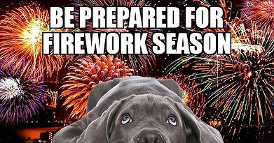 dog fireworks.jpg