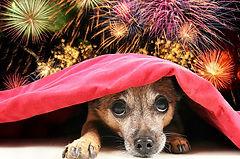 FireworksDogs.jpg