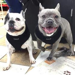 Teddy & Lulu
