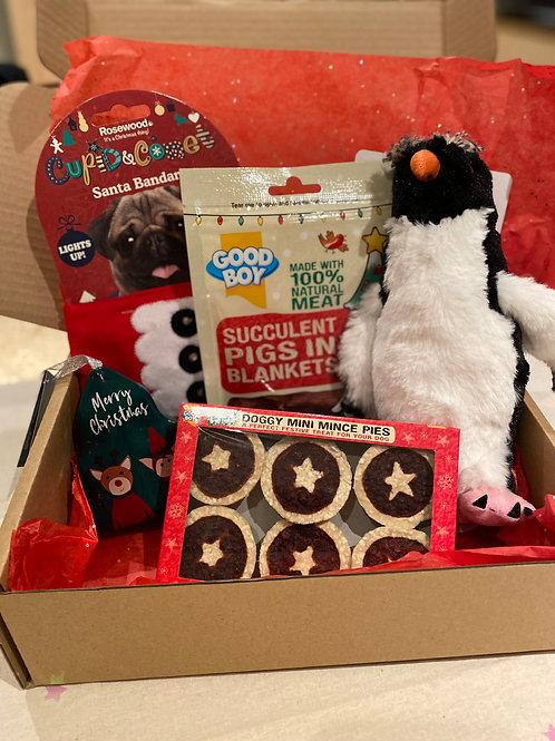 Christmas dog gift box small to medium breeds