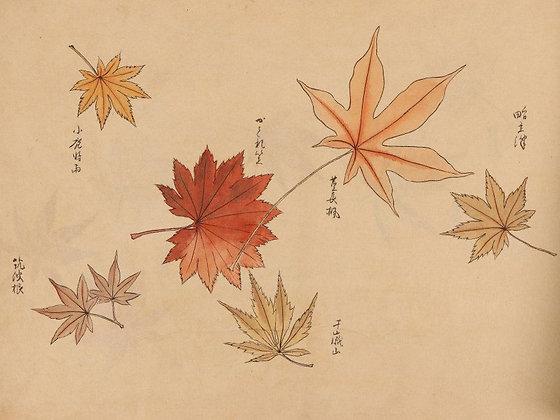 momiji maple leaves album view-2