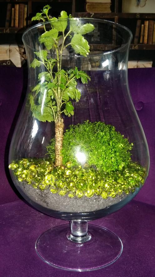 Vase Terrarium Mini Plante Depolluante