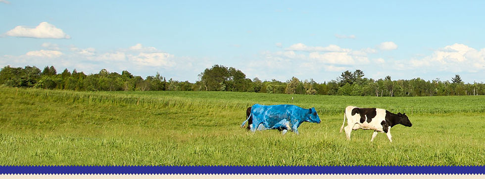 Blue Cow Cafe in Big Rapids MI