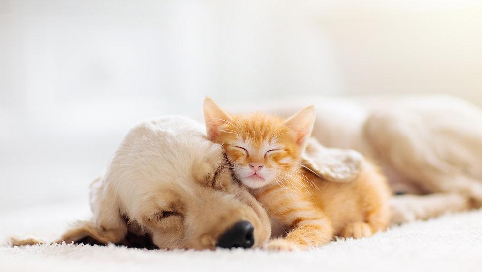 犬と猫の昼寝