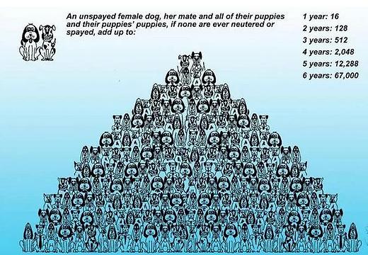 Animal multiplication.png