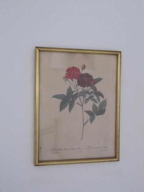 Gravure encadrée vintage fleurs rouges
