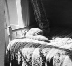 Honey the cat Aug 1956