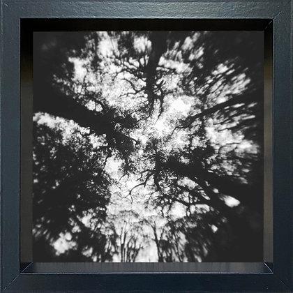Untitled observation (#30) - framed