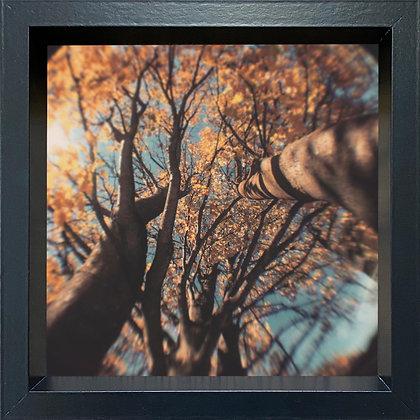Untitled observation (#34) - framed