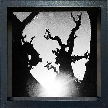 Untitled observation (#38) - framed
