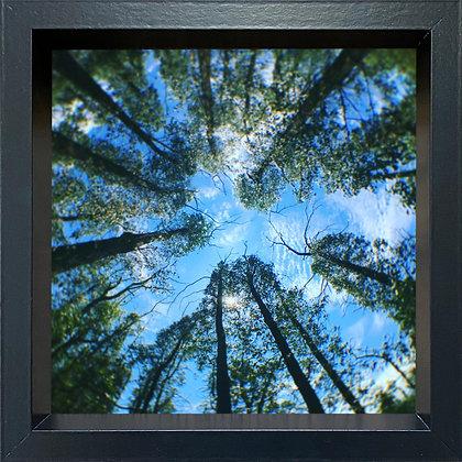 Untitled observation (#41) - framed