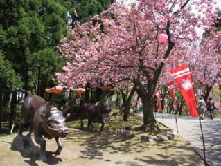【金沢】4月19日~21日の宿泊予約ありがとうございました。