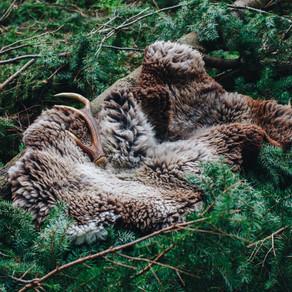 Sheepskins for The Plant Path Folk