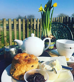 A cream tea and pot of daffodils on the terrace at Washingpool Farm, Bridport