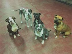 Nate's pups 1 (2)