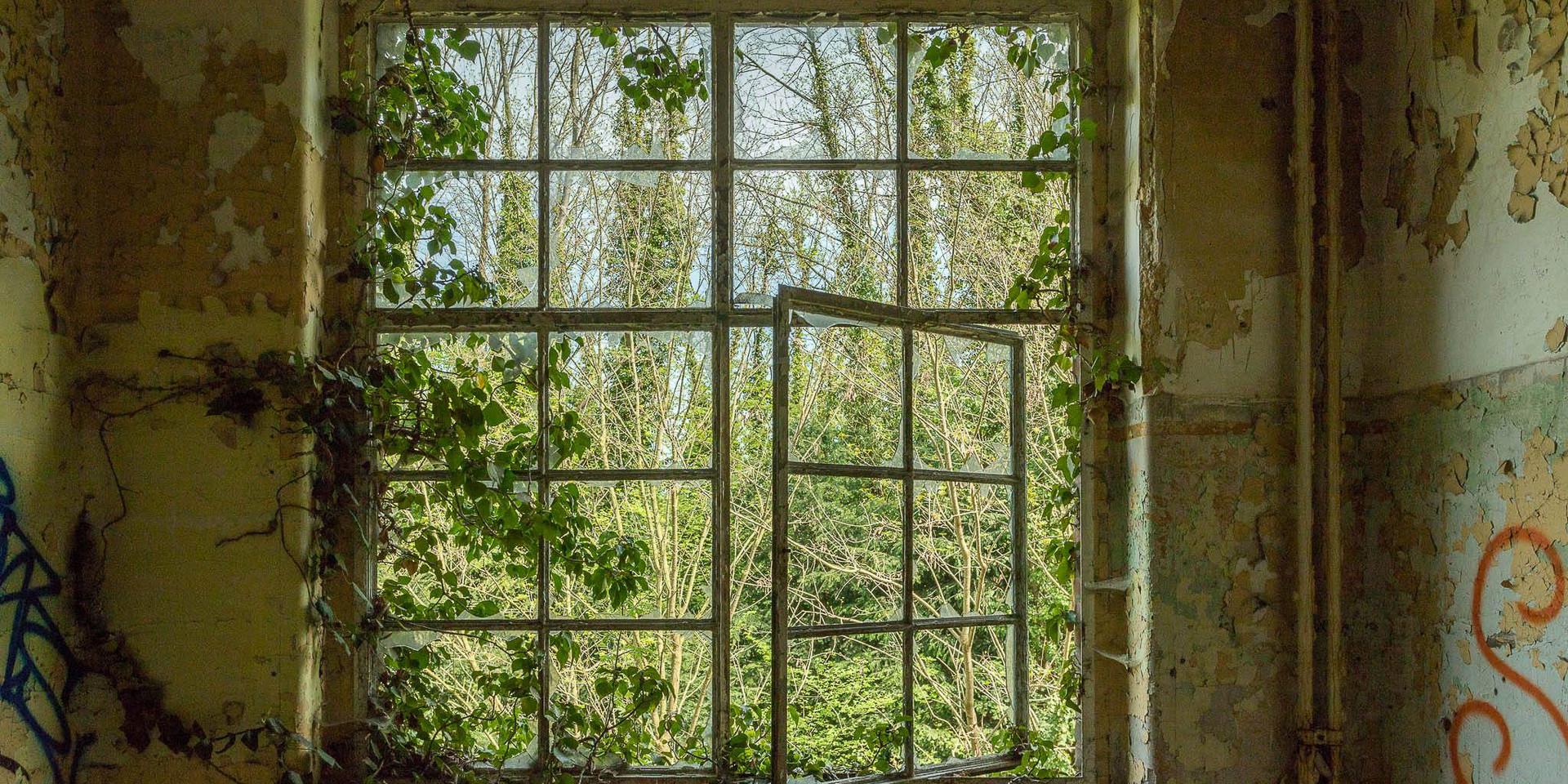 Urbex, open window into the wilderness