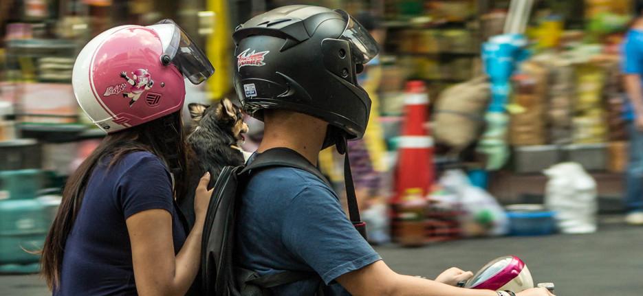 Dog on moped Bangkok