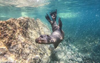 Sea lions - matthew-t-rader - unsplash.j