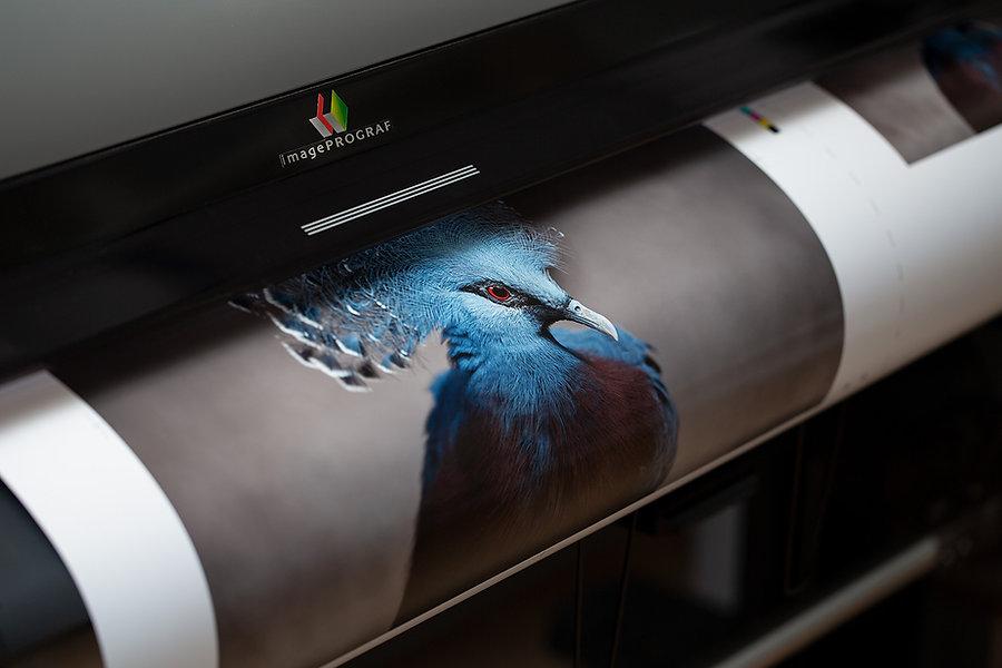 Laboratorio di stampa fotografica digitale, Svizzera (Ascona, Ticino)