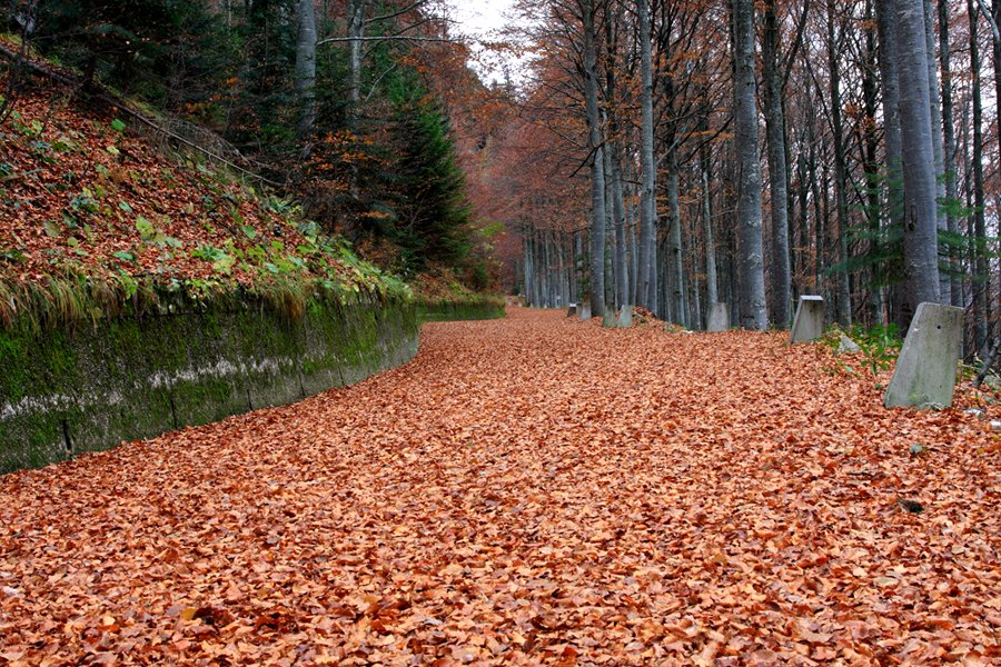 Autumn Woods  2013-10-26-16:42:41