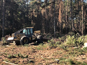 Skidder loggng trees