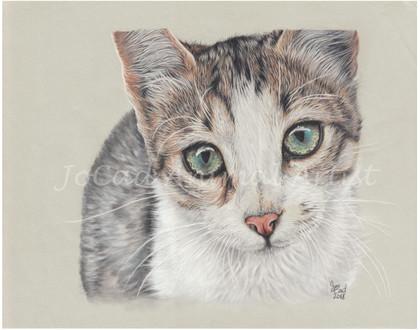 SPCA cat web.jpg