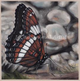 papillon watermark.jpg