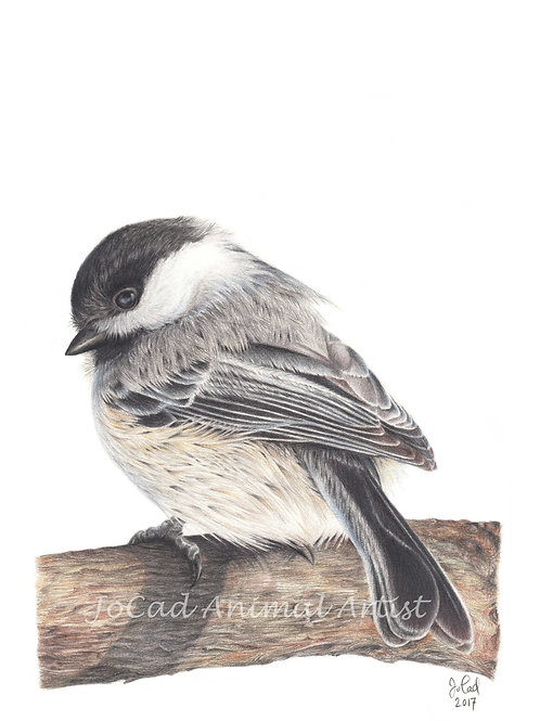 Chickadee-dee-dee card