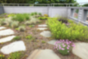 green roof, water runoff, sedums, perennials, rooftop environments, irrigation