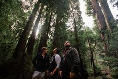 TCR_WickedKing_Redwoods-6.jpg