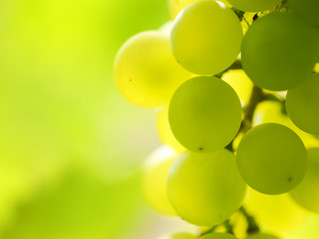 Why we are opting for wine instead of beer on St. Patrick's Day?