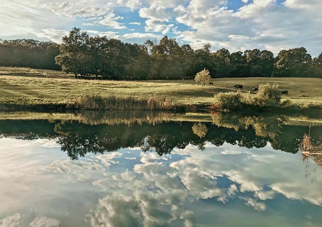 Pond_Clouds_Cows.jpg