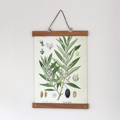 Botanische poster Olive met houten posterhanger van het merk All Thing We Like.