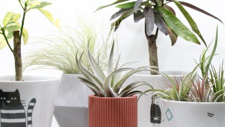 Maak je urban jungle compleet met deze ecologische bloempotten