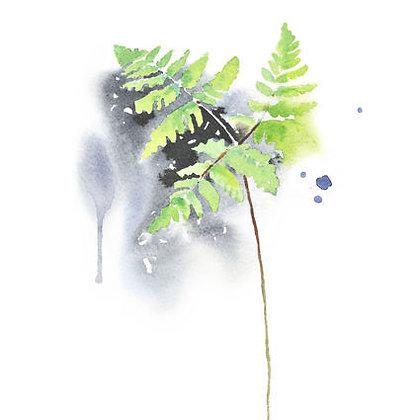 Poster - XS - Oak Fern (13x18 cm)