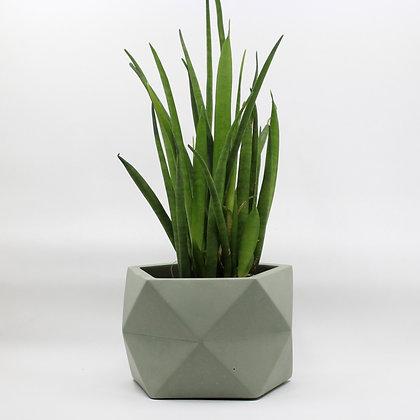 Geometrische bloempot Palua met plant in Olive Green van het merk House Raccoon.
