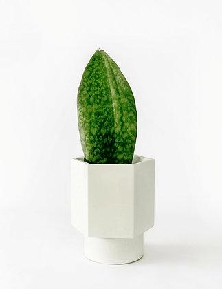 Zelfwatergevende Bloempot Hapi met plant in Silver Green van het merk House Raccoon.