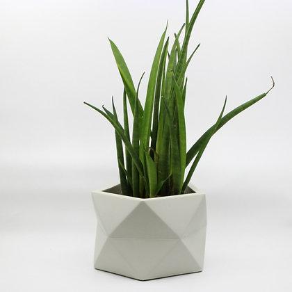 Geometrische bloempot Palua met plant in de kleur Silver Green van het merk House Raccoon.