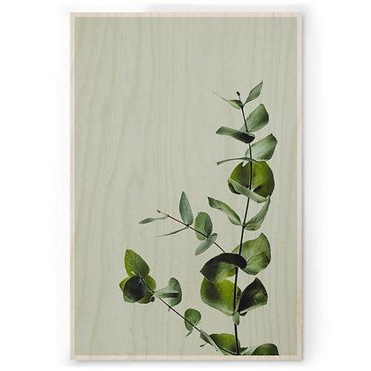 Houten Poster - M - Eucalyptus