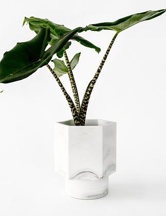 Zelfwatergevende bloempot Hapi met grote plant in white marble van het merk House Raccoon.