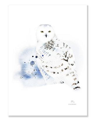 Poster - XS - Snowy Owl (13x18 cm)