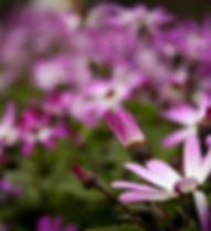 foliage-2.jpg