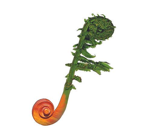 Fiddleheads logo logo.jpg