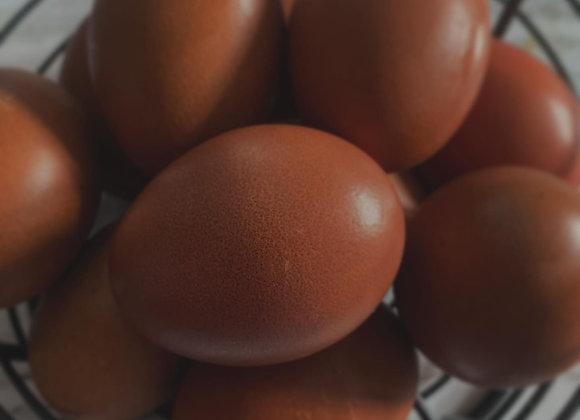 Black Copper Maran Hatching Eggs,  Half Dozen